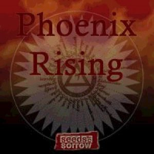 Seeds Of Sorrow - Phoenix Rising cover art