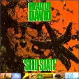 Head of David - Seed State cover art