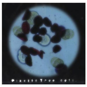 Plastic Tree - Cell cover art