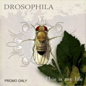 Drosophila - Promo 2010 cover art