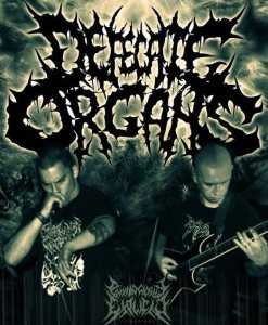 Defecate Organs photo