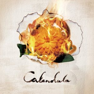 a crowd of rebellion - Calendula cover art